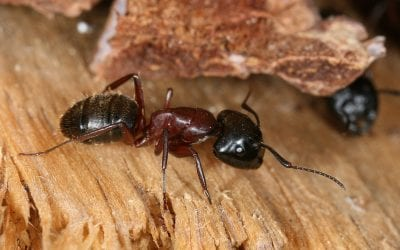 3 Common Wood-Destroying Insects Besides Termites